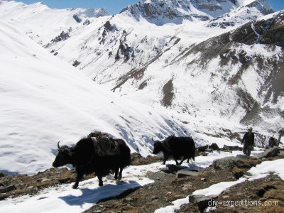 Trekking with yaks in Bhutan