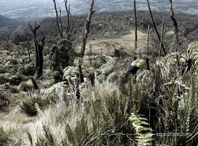 Mt. Hagen, Papua Neu Guinea
