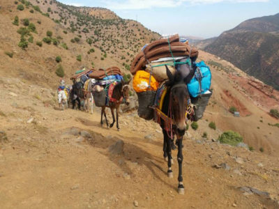 Mules in the Atlas